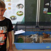 Tim (9) stellte seine selbst aufgezogenen Hühnerküken aus; Foto: C. Schreiter